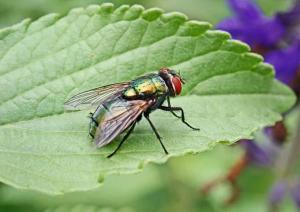 chosing the pest exterminator