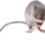 how to chose the pest exterminator